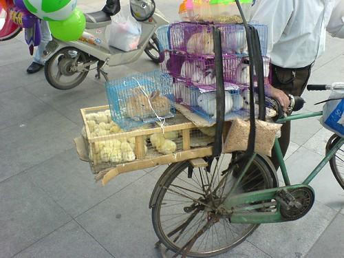 Pets for Sale Outside Zhongshan Park