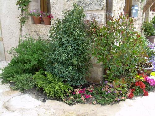 arbustos variados