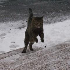 Leaping Atticus