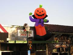Pumpkin Dracula