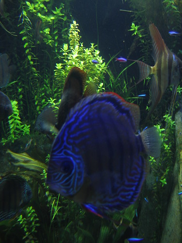 Freshwater Aquarium Fish For Sale Online The local fish stores and