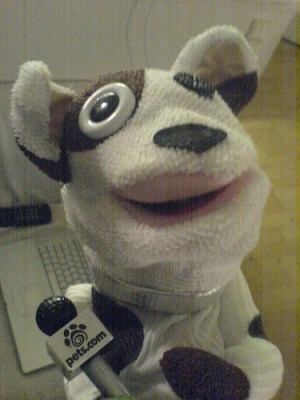 Picture of The Pets.com Sock Puppet on Flickr
