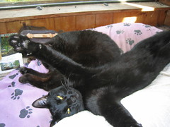 Bubba and Bezel - I'm not touching him! - Fall 2006