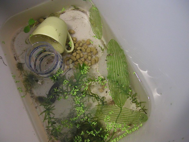Betta Breeding Setup Pictures Images   Frompo