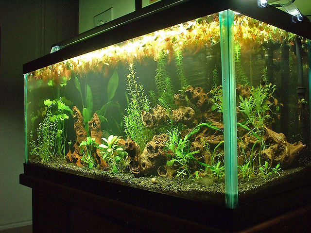 30 Gallon Planted Aquarium   a photo on Flickriver