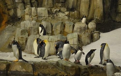 biodome_penguins2
