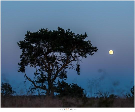 Het landschap wordt donkerder en donkerder, en de Maan in vergelijking lichter en lichter. Het verschil in helderheid wordt te groot om realistisch vast te kunnen leggen. (100mm brandpunt)