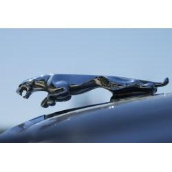Small Crop Of Jaguar Hood Ornament