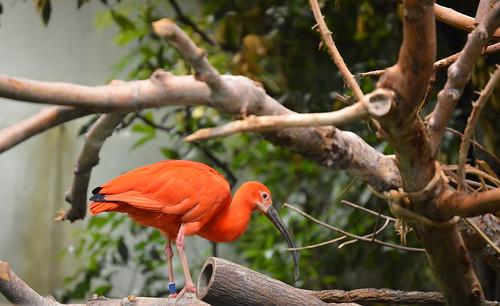 biodome_orange bird