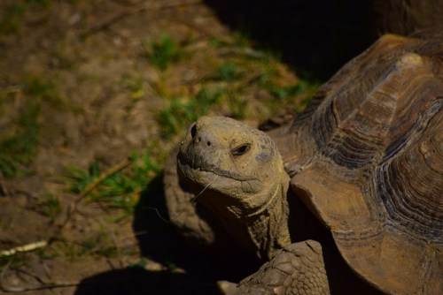 Aggravated Tortise