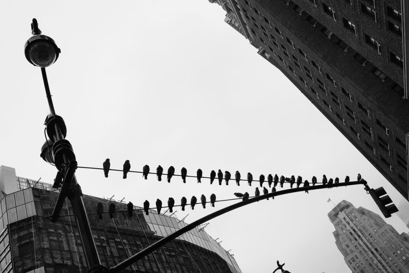 Manhattan Watchbirds
