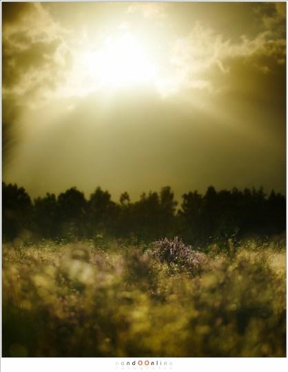 De felle zon die net boven de wolken uitkomt. Heerlijk tegenlicht met hetzelfde heidestruikje in beeld. (70mm - f/2,8 - combinatie van 2 belichtingen)