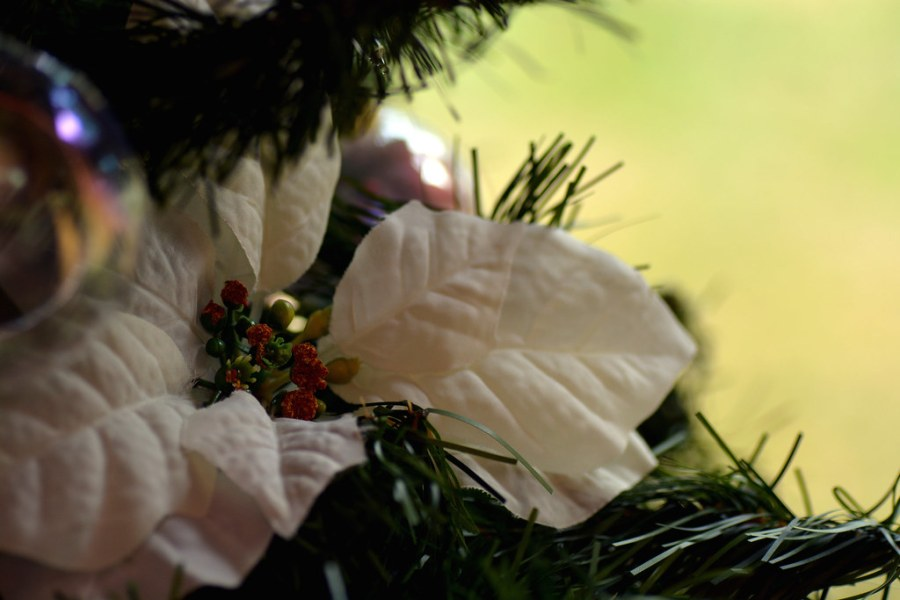 Lakeside Christmas