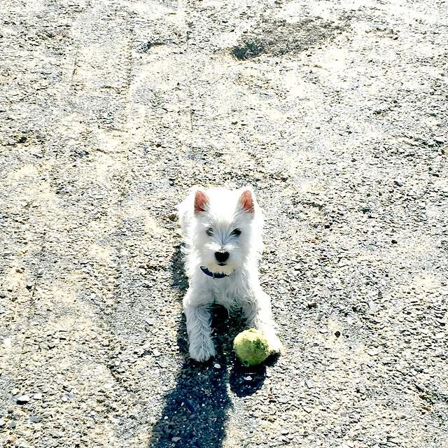 Puppy number 2