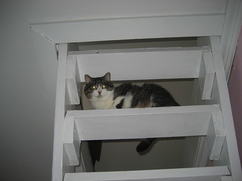 Lucy on the loft stairs