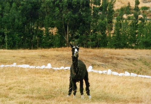 Were-llama