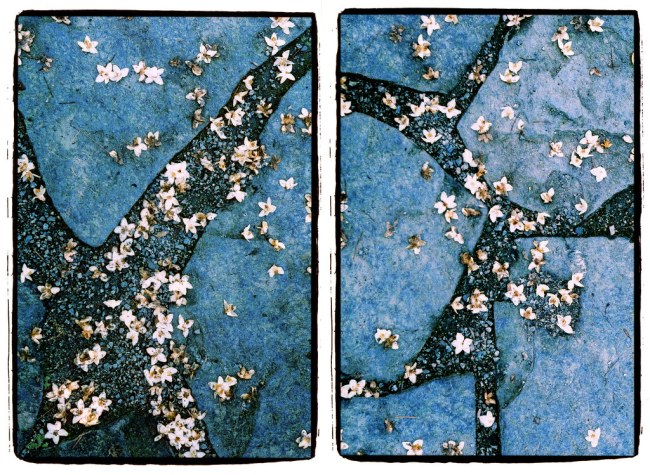 The gentle art of fallen petals