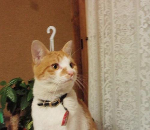 3352910797 f9b477b42a o 100+ Funny Photos Taken At Unusual Angle [Humor]