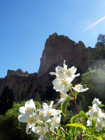 Smith Rock White Flowers
