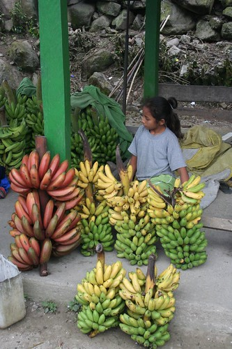 the many types of Bolivian banans
