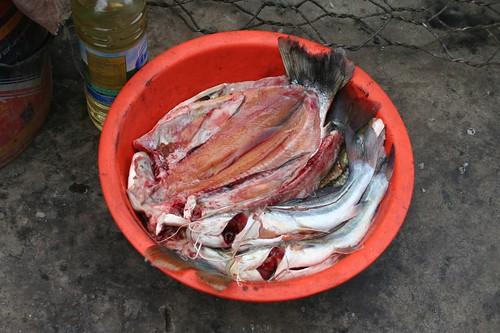 oil, fish = big meal