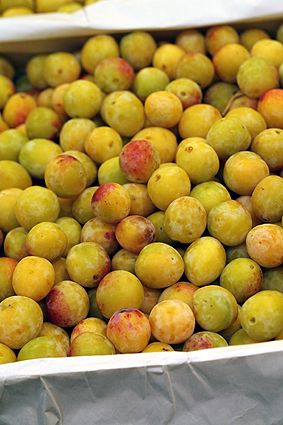 Mirabelles-First of the Season