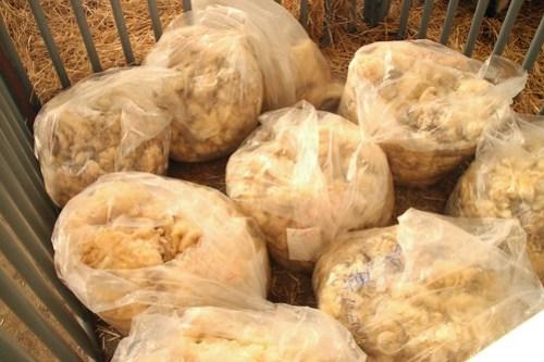 san diego county fair wool