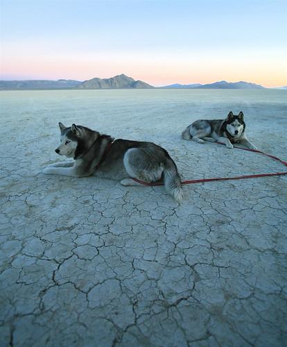 Playa Pups