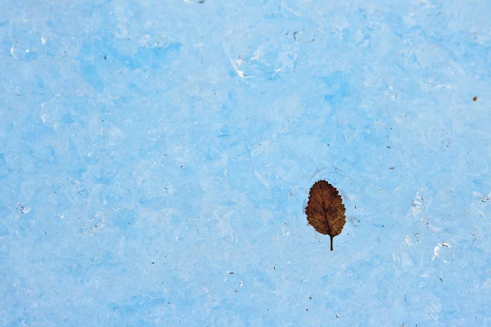 A pesar de las condiciones extremas de la patagonia, la vida también se desarrolla allí. Una hoja posa en el suelo del Perito Moreno. (Guillermo Morales - El Calafate, Patagonia, Argentina)