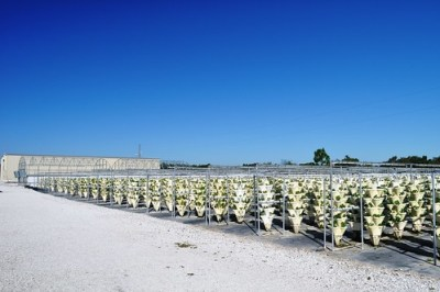 Hydro-Taste, a Hydroponic U-Pick Farm in Myakka City, Fla.
