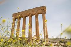 columns through flowers