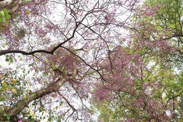 City Nature - The Blues Strokes of a Mysterious Tree, Maharshi Raman Road