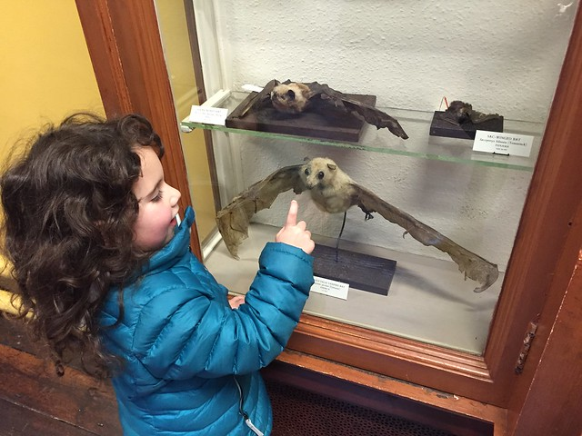 My daughter getting friendly with the stuffed bats at the Natural History Museum of Dublin
