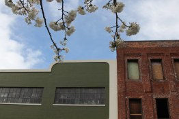 Portland - Chinatown in Spring