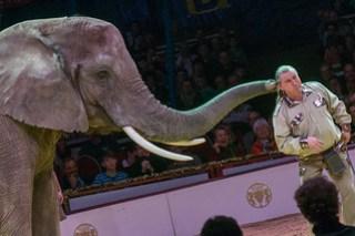 Elefanten - Soni Frankello