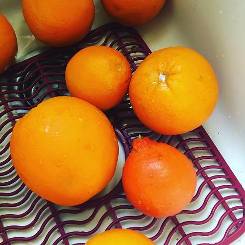 future marmalade