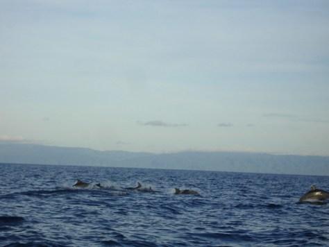 dolphins at balicasag bohol