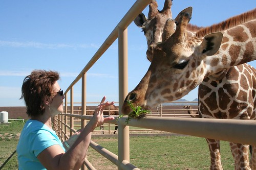 mom and the giraffes 003