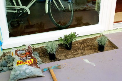 Planting the patio beds