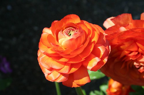 orange, print