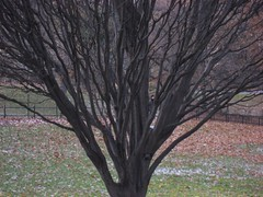 Tree in Central Park