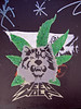 """weed wolf • <a style=""""font-size:0.8em;"""" href=""""http://www.flickr.com/photos/91378149@N00/2655104262/"""" target=""""_blank"""">View on Flickr</a>"""