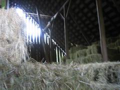 Leaping Lamb Farm (barn, hay, Lammie, sunlight) Oct 2007 008