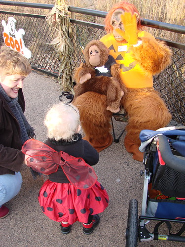 Meeting the Orangutan