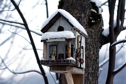 birdhouse-.jpg