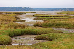 Nisqually National Wildlife Refuge, Washington