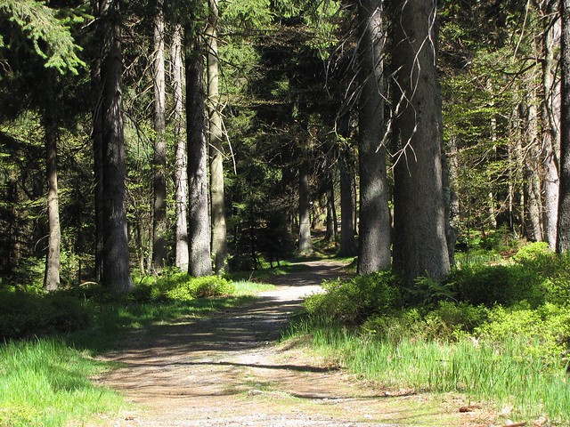 Ein neuer Weg - Im Wald um den Haidel