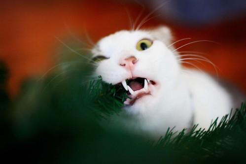 tree eater