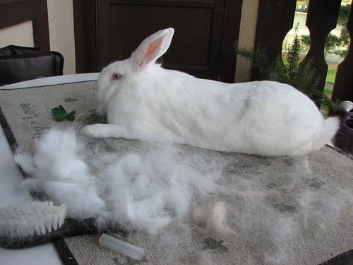 gus and his pile of brushed fur