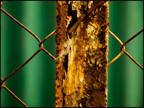 green & rust